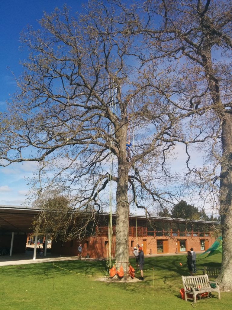 Great big tree climb