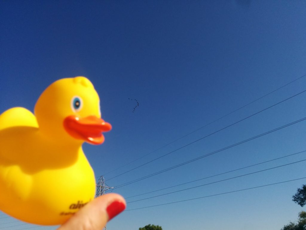 Flying yellow rubber duck